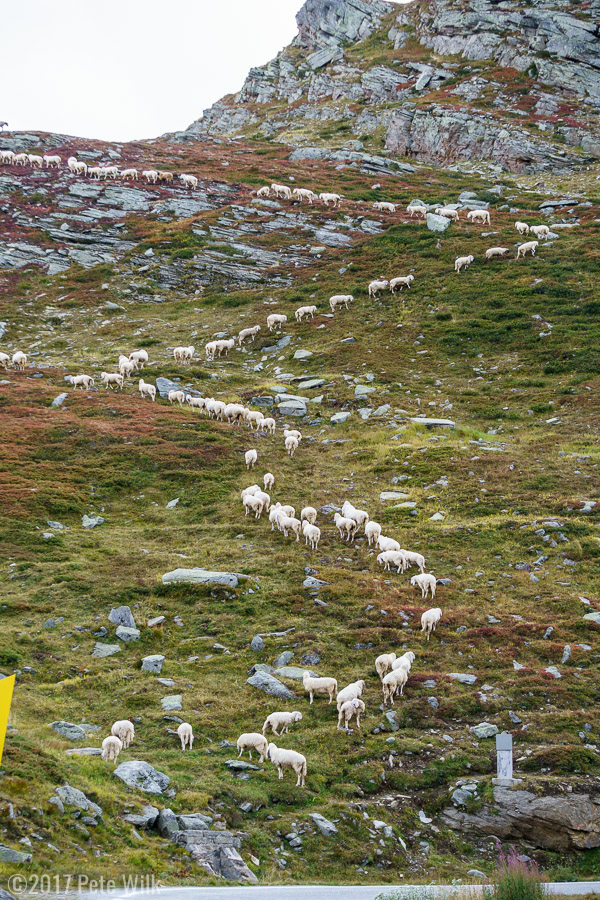 The source of the sheep.  They were very good about moving almost single file up the slope.
