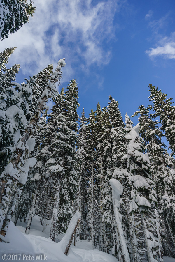 The truely blue skies of our termporary respite of snow.