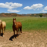 Once out of the mountains we were back in farmland and these horses wanted a handout.