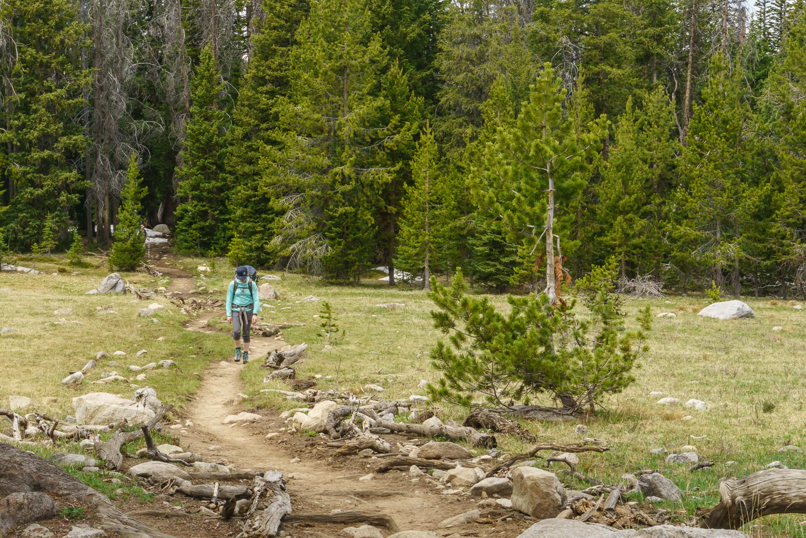 Our hike in started at 9500\' and wandered through forested flat terrain.