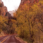 The last colors of fall in Zion.