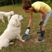 Sampson and Yeti getting fed.