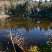Small pond near summit of Mt. Greylock