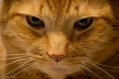 Evil Henry, still judging.