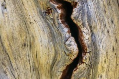An interesting crevice in a dead tree.