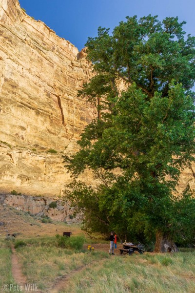 Our nice campsite for the previous night.  The cottonwood tree was enourmous and ancient.