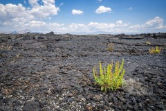 Despite the huge expanse of just lava there are some small plants and trees in places.