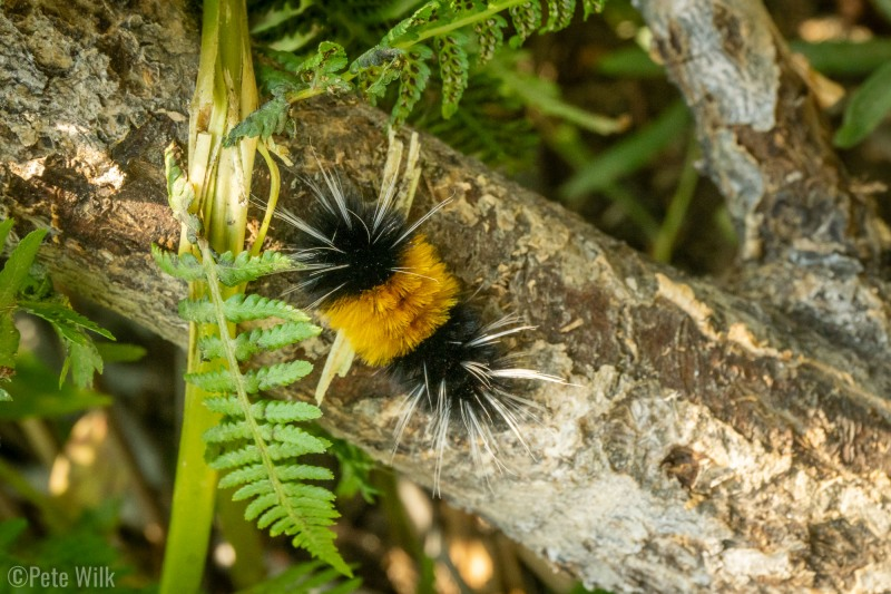 An interesting caterpillar I spied during our descent.